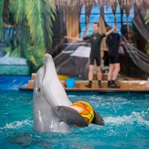 Дельфинарии, океанариумы Клина
